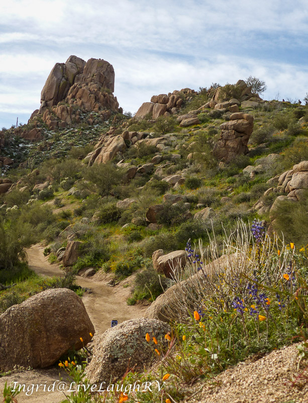 Pinnacle Peak trail with wildflowers in the foreground