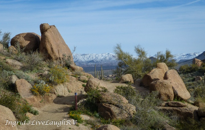 Pinnacle Peak trail in Scottsdale, Arizona. Large boulders and yellow flowers line the trail with snow capped mountains in the distance