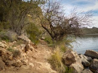 hiking near the shore of Saguaro Lake