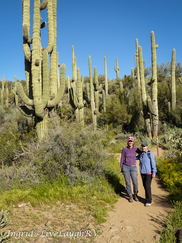 two hikers among a forest of saguaros