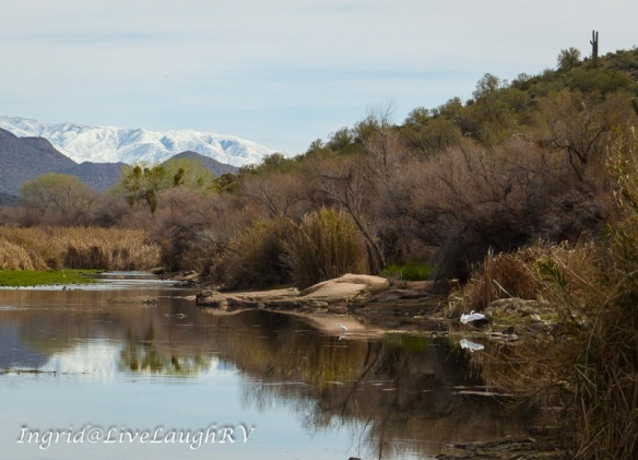 An egret lands along the shore of the Salt River near Phoenix Arizona. Snow capped Four Peaks can be seen in the distance.