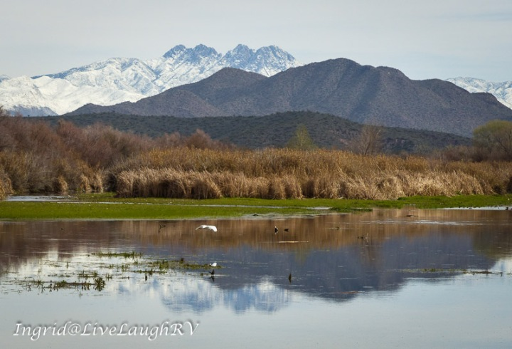 snow covered peaks in the distance reflecting in the Salt River while a white egret flies by