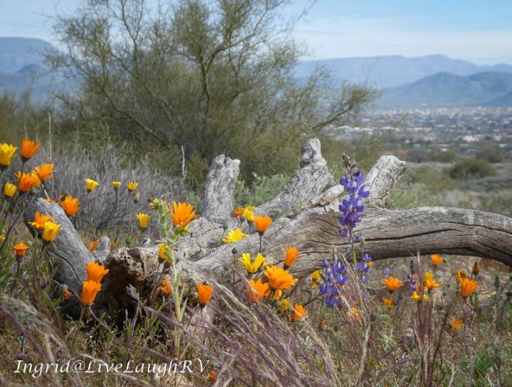 desert flowers against a log background
