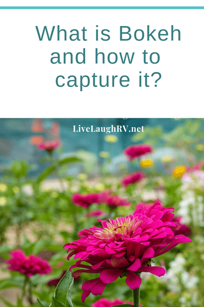 #what is bokeh, #How to capture bokeh, #photography tips, #blurry background,