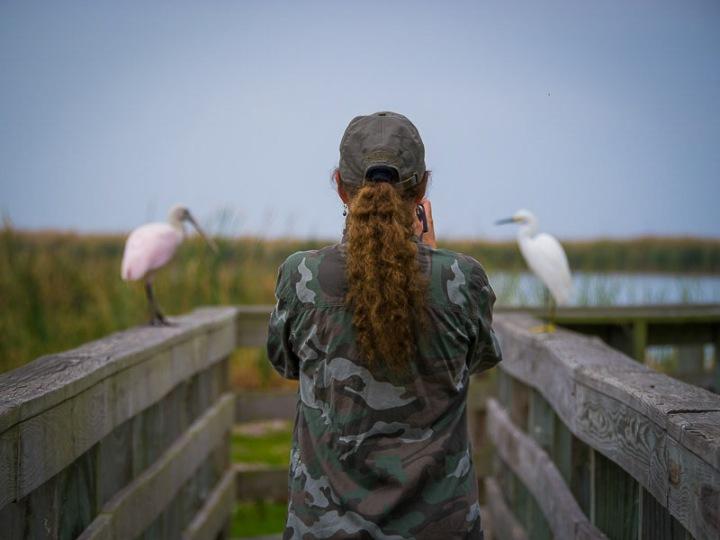 Photography photographing shorebirds.