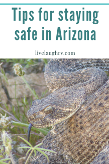 tips for staying safe in the Arizona desert, what to do when you see a rattlesnake in Phoenix