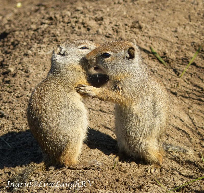 Best Friends, #best friends, #hug it out