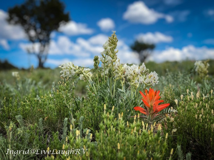 Colorado wildflowers #Bokeh #wildflowersinColorado
