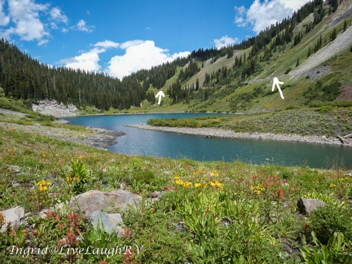 Emerald Lake, Crested Butte, Colorado, mountain meadow wildflowers along the shore of an emerald colorado lake in Colorado's high country