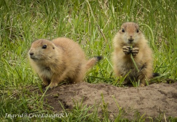 The prairie dogs are always entertaining.