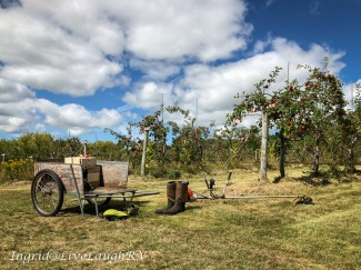 Garden equipment in an apple orchard