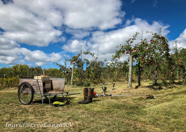 An apple orchard in northern Wisconsin Blue Vista Farm