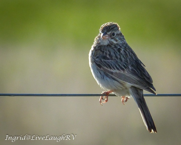 a bird on a wire fence