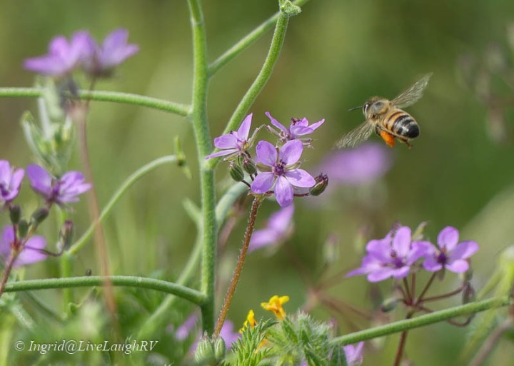 purple flowers and a bee in flight