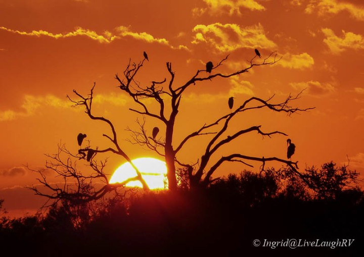 birds in a dead tree with a setting sun and orange sky