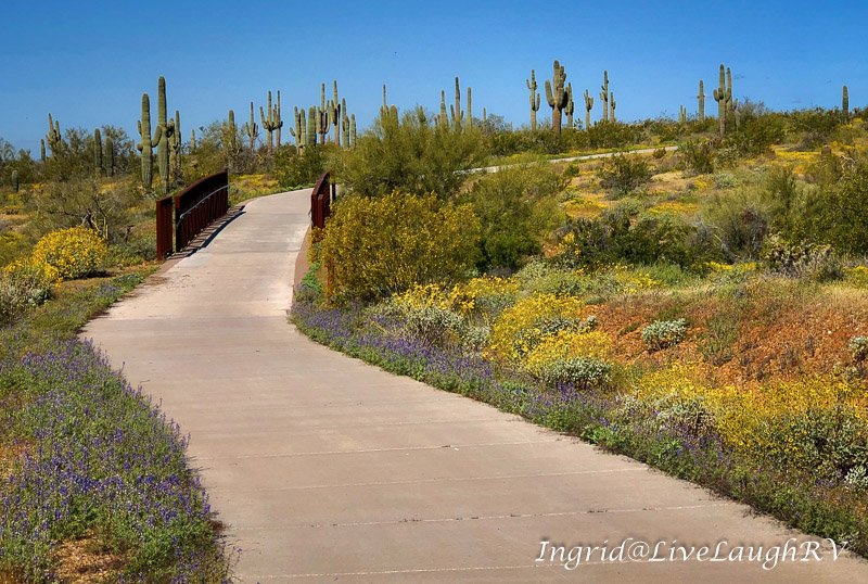 a sidewalk meandering through a desert landscape. Social distancing.