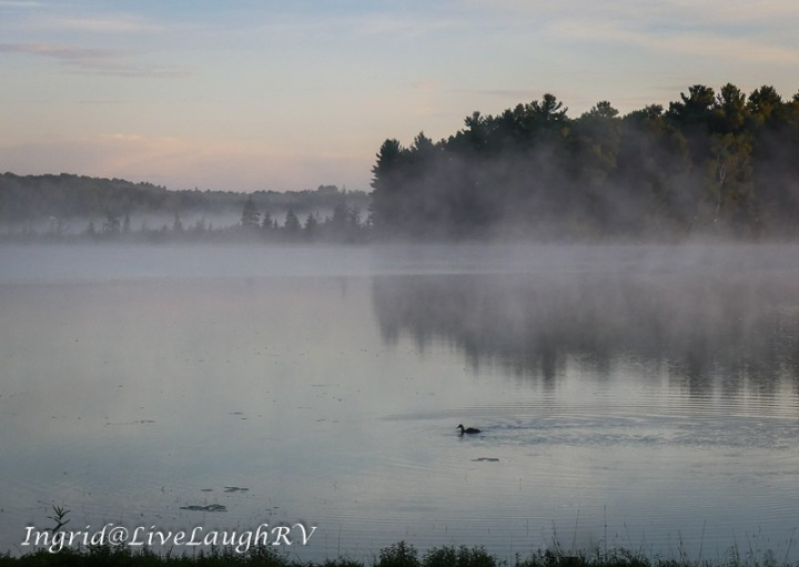 a lone duck swimming on a lake slightly covered in fog