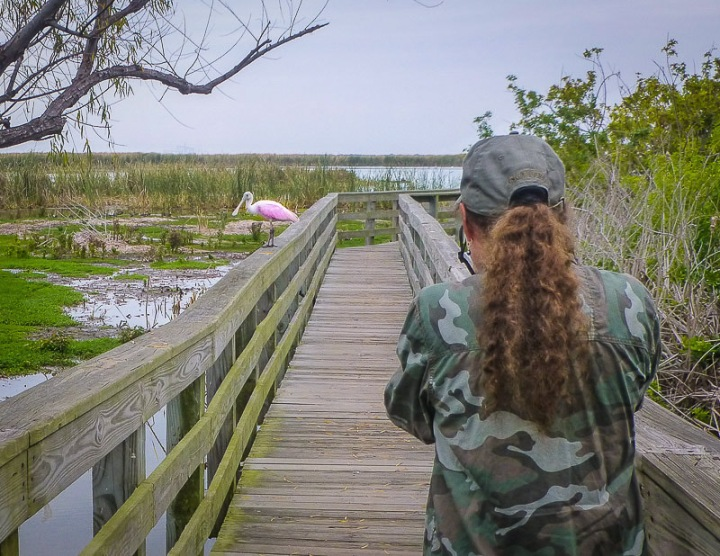 a woman photographing a pink roseate spoonbill