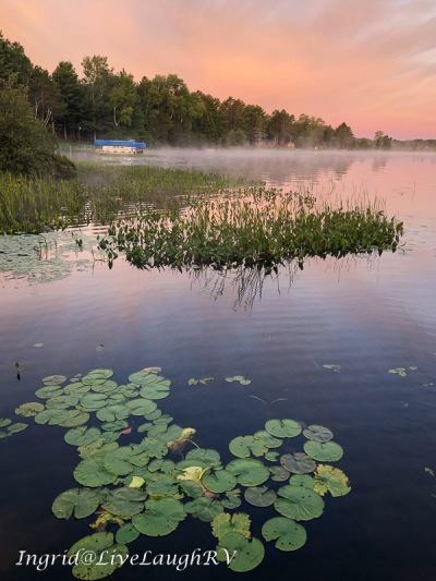 mist on a lake with lily pads in the foreground