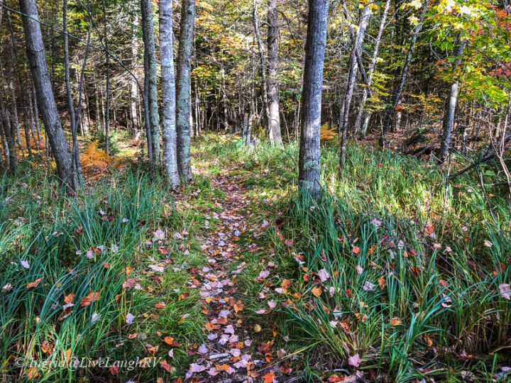 hiking trail with fall leaves on the ground