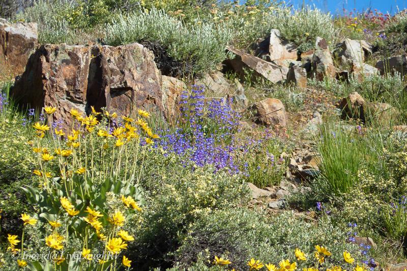 yellow and purple wildflowers among a rocky landcape