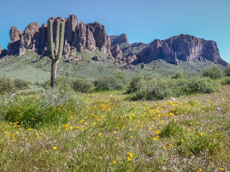 Superstition mountains, yellow poppies with the Superstition mountains in the background